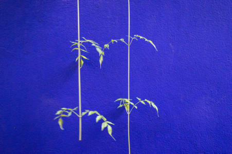 Blue Majorelle (Marrakesh, Morocco, December 2016)